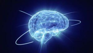 brain_580